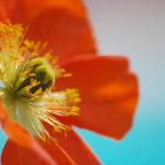fleur-developpement